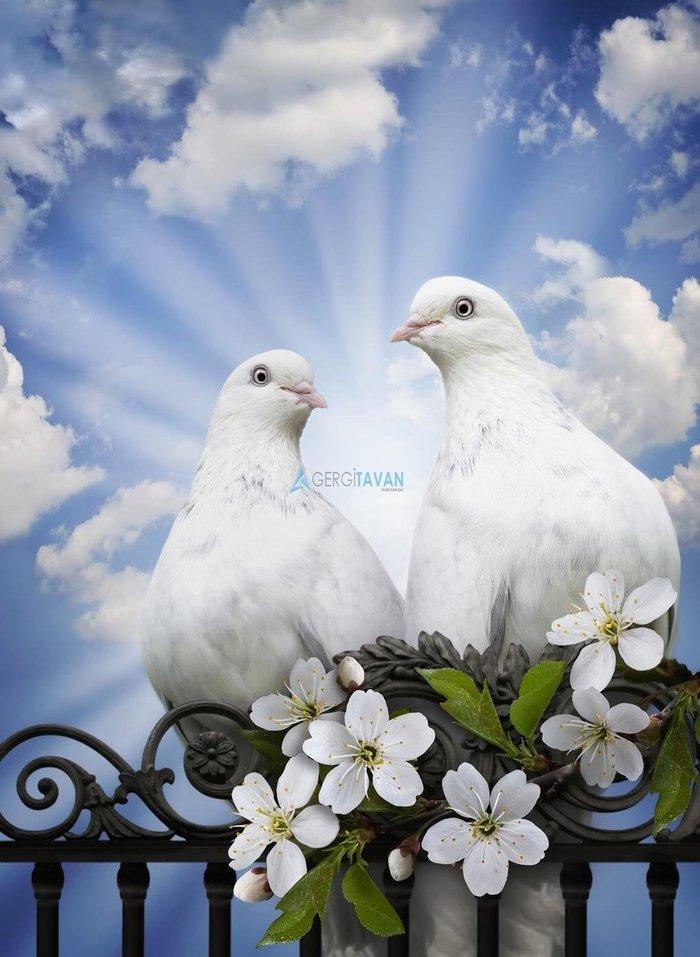 Голуби на свадьбе поздравление