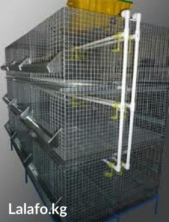 Выращивание бройлерных уток в клетках 22
