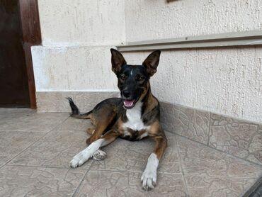 Животные - Каджи-Сай: Фонд помощи Животным Добрые руки ищет добрые руки для молодой красивой