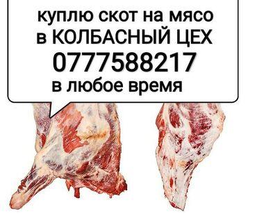 ксерокс купить в Кыргызстан: Куплю коров лошадей телок в колбасный цех