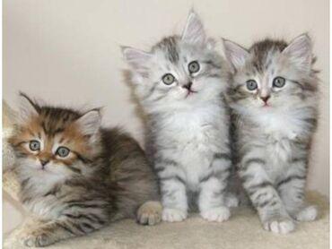 Για γάτες