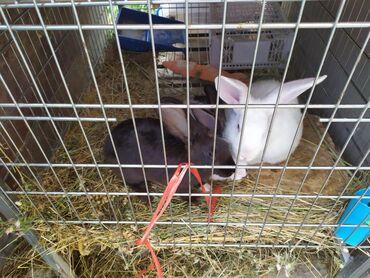 Продаю кролики