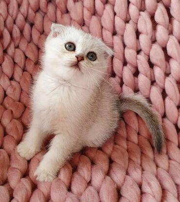 ΔΙΑΘΕΣΙΜΟ ΑΓΑΠΗΜΑΤΙΚΟ ΣΚΟΤΙΚΟ ΦΑΚΕΛΟ ΓΑΤΕΛΑΣΌμορφο κορίτσι. το γατάκι