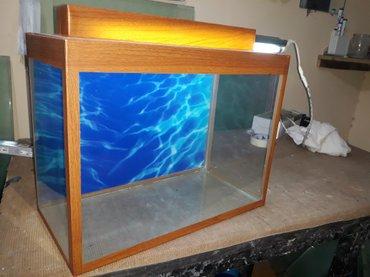 Bakı şəhərində yeni il qabaqi akvariumlara baliqlara endirim  wekildeki akvarium 25 l