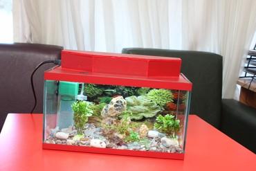 - Azərbaycan: Akvarium.Her olcude akvariumlarin sifariwi qebul olunur. wekildeki