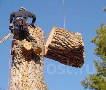Дарак кыябыз,бак кыябыз,бутак кыябыз,пилю деревья спилить дерево