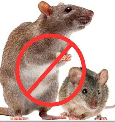 Ультразвуковой отпугиватель крыс и мышей. РоссияНа сегодняшний день