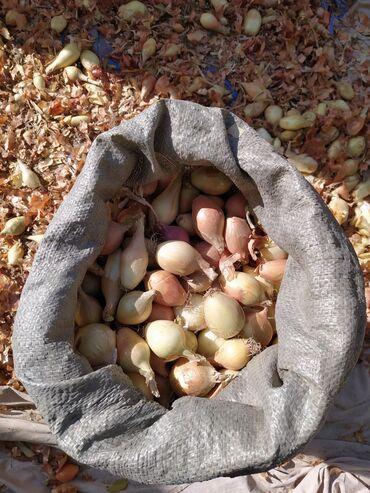 список в роддом бишкек 2020 в Кыргызстан: Лук мелкий, около 1 тонны, лук 2020 года