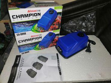 Champion 2cixişliSəssizAkvariumlar var Çeşid coxdu hazırlari müxtəlif
