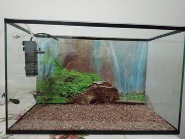 Продаю аквариум 30л. цена 1500с