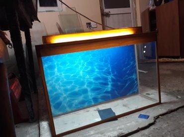 Bakı şəhərində 50 litrelik akvarium endirimli qiymetlerle bawqalarida var