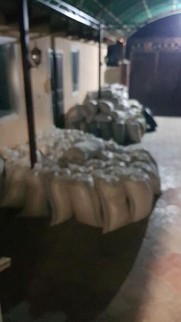 ячмень бишкек in Кыргызстан   ГРУЗОВЫЕ ПЕРЕВОЗКИ: Продаю ячмень.урожай Жумгал 2021г 25с.ячмень в Бишкеке