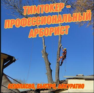 автовышка бишкек in Кыргызстан | ГРУЗОВЫЕ ПЕРЕВОЗКИ: Спилить дерево? Мы можем легко спилить любое самое сложное дерево
