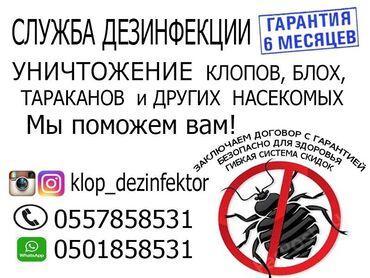 работа в токмаке с ежедневной оплатой в Кыргызстан: Служба дезинфекции в Бишкеке Токмаке и Кантеуничтожение клопов, блох