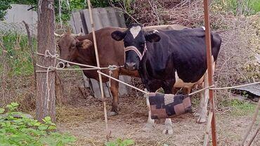 Животные - Ак-Джол: Другие животные