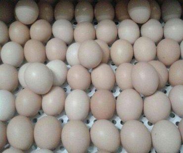 Продаем яйцо инкубацэоное породы в Кок-Ой