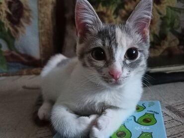 Отдам котенка в добрые руки.Очень активная,подвижная девочка .2 месяца