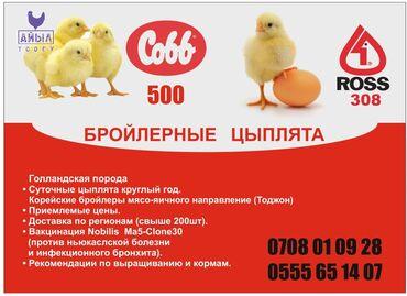 БРОЙЛЕРНЫЕ ЦЫПЛЯТА ИЗ ГОЛЛАНДИИ и ТУРЦИИ COBB 500 и ROSS 308 Первая