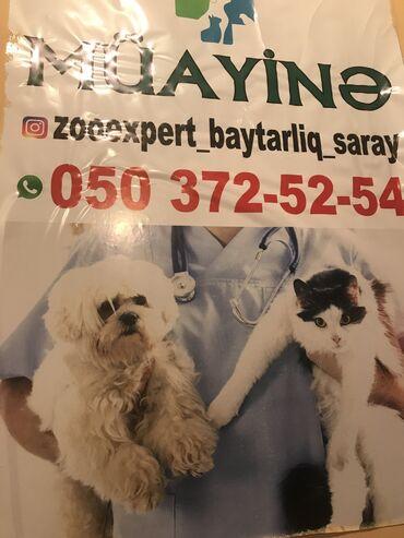 Digər xidmətlər - Saray: Zoo baytarliq