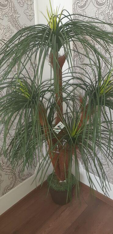 lokbatan - Azərbaycan: Suni palma 20 azn lokbatan