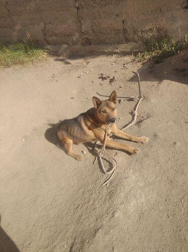 82 объявлений   ЖИВОТНЫЕ: Собаки