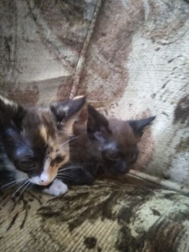 12 объявлений | ОТДАМ ДАРОМ: Отдаю котят бесплатно в добрые руки