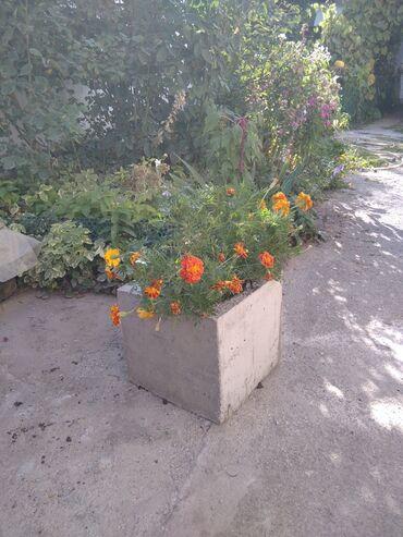Горшки для растений - Кыргызстан: Продаю вазоны для цветов из ж-б 340х340х340 мм. Связь WhatsApp
