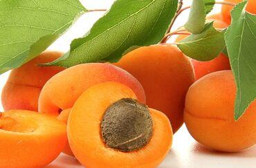 4 объявлений: Принимаем фуры для абрикоса!!!