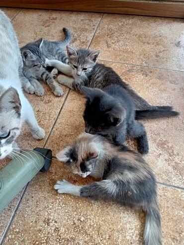 Животные - Джал мкр (в т.ч. Верхний, Нижний, Средний): Отдам котЯт хорошие руки