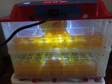 Bakı şəhərində En muasir mini inkubator,56yumurtaliq, 6 ekrani var, 100% avtomat, zav
