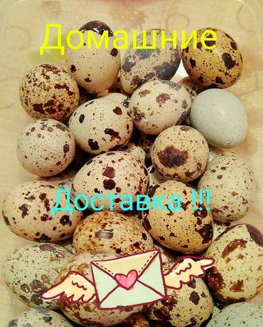 Продаю перепелиное яйцо. Домашние.  Доставка БЕСПЛАТНАЯ!!! #яйцо #яйца
