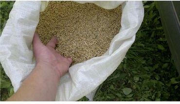 индюк цена за кг в Кыргызстан: Арпа сатам . Бир тонна калды