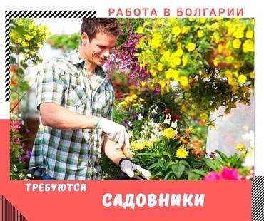 Работа за границей в Кыргызстан: Работа садовник в Болгарии  г. Варна Можно без опыта  Обязанности: Выр