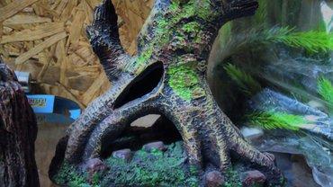 Гроты для аквариумов от 320 сом и выше. Все новое в Бишкек