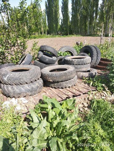 Транспорт - Полтавка: Грузовые авто шины для септика Штук по 100 сом