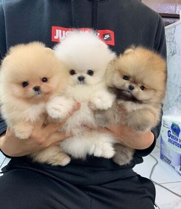3 Puppies ready to go