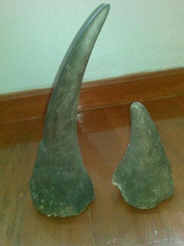 асус рог фон 2 в Кыргызстан: Куплю рог носорога рога носорога дорого антиквариат старинные