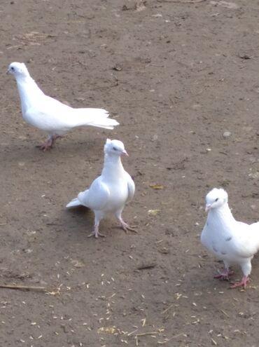 Животные - Сиазань: Птицы