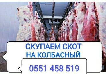 Работа в оше швейный цех - Кыргызстан: Куплю | Коровы, быки, Козы, козлы, Лошади, кони | Любое состояние, На забой, на мясо