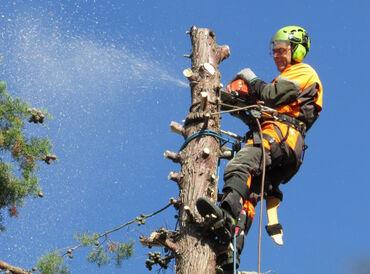 Спил деревьев Бишкек и пригороды.Срубить дерево.Спилить дерево.Спилить
