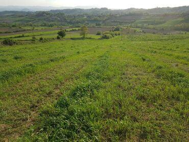Poljoprivredno zemljište, Vlasnik