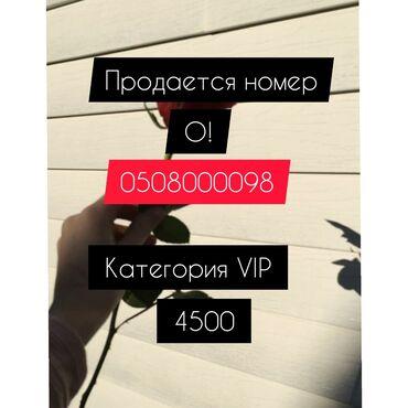 vip девушка бишкек в Кыргызстан: VIP номер Торг уместен
