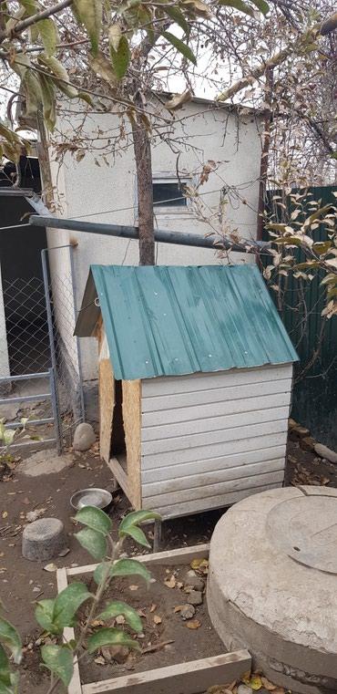 Домик для собаки. в Бишкек