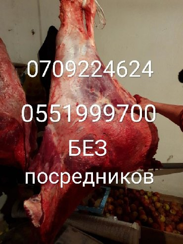 В колбасный цех,принимаем дорого коров, быков и лошадей,а также
