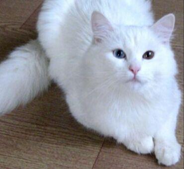 200 elan   HEYVANLAR: Sort pisik balalari bir ayliqdi. nomrenin wp na yazin