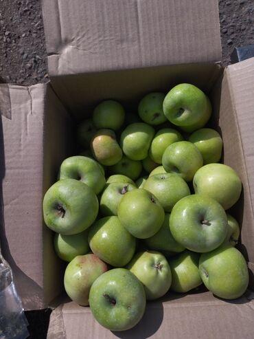 гостиница кара балта дешево in Кыргызстан | ПЛАТЬЯ: Продаю яблоки