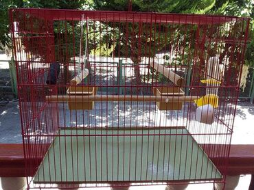 Heyvanlar üçün mallar Mingəçevirda: Quş qefesi satilir. Su qabi, mel, komur ve duz ustunde verilir