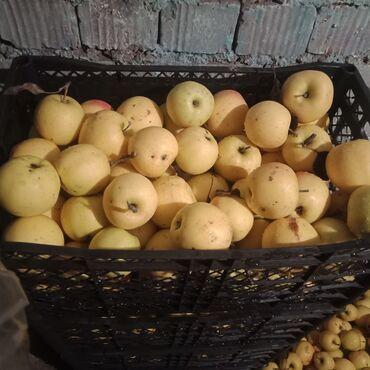 jubku 40 razmer в Кыргызстан: Яблоки по 40 сом оптом