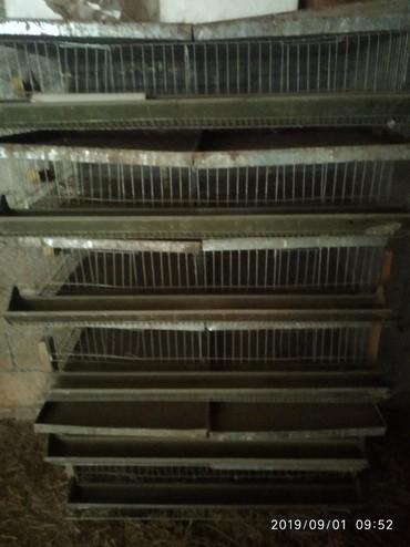 Зоотовары - Кок-Ой: Клетка. Бодоного Капас. 6 этаж. 1.0.5. срочно. торг