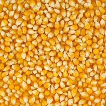 30 объявлений: Продаю кукурузу 50 тонн село Туз